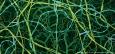 La red de colágeno, laminina y proteoglicanos conocida como Membrana Basal © David S. Goodsell 1999
