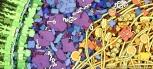 El interior de una bacteria E. coli © David S. Goodsell 1999