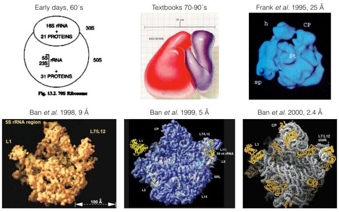 3DribosomesEvolution.001.png.001.png